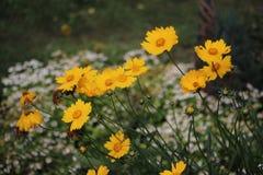 Tag-Frühling und Blumen Stockfotografie