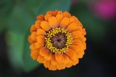 Tag-Frühling und Blumen Lizenzfreies Stockfoto