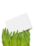 Tag in grass Royalty Free Stock Photo