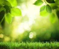 Tag im sonnigen Wald Lizenzfreies Stockbild
