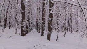 Tag im Winter-Wald, werden die Bäume mit Schnee bedeckt stock footage