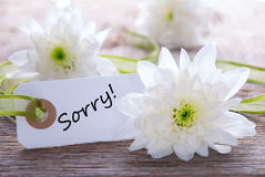 Tag with Sorry. White Tag with the Word Sorry on it and White Flowers in the Background stock photography