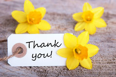 Tag with Thank You. And Yellow Narcisse Blossoms in the Background Royalty Free Stock Photo