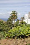 Taganana village. On the island of Tenerife, Canary Islands Spain. You can see the ocean in the background. It´s a vertical picture Stock Photo