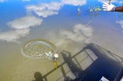 Tagandeprövkopior av vatten för laboratoriumprovning Begreppet - analys av vattenrenhet, miljö, ekologi arkivfoto