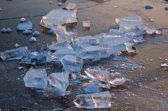 tagen hylla för bild för Antarktiskristallis Arkivbild