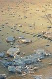 tagen hylla för bild för Antarktiskristallis Arkivfoton