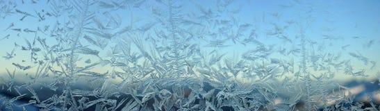 tagen hylla för bild för Antarktiskristallis Royaltyfria Foton