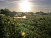 Tagesanbruch-Wiese Lizenzfreies Stockbild