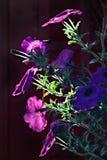 Tagesansicht der Blumenblüte Lizenzfreies Stockbild