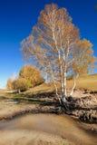 Tagesansicht der Herbstszene bei Inner Mongolia Stockbilder
