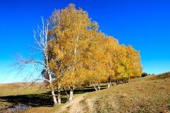 Tagesansicht der Herbstszene bei Inner Mongolia Stockfotos