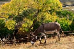 Tagesansicht der Herbstszene mit Pony Stockfotografie