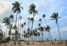 Tagesansicht des Sandstrandes mit Kokosnussbäumen Lizenzfreies Stockfoto