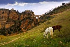 Tagesansicht von Ronda mit Brücke Puente Nuevo Stockbilder