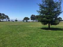Tagesfeld mit Bäumen Stockfotos