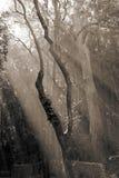 Tageslicht, das den Wald mit dem Sepiatonen betritt Stockfoto