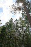 Tageslicht, das durch das Forrest glänzt Lizenzfreies Stockbild