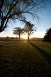 Tageslicht durch Bäume stockfoto