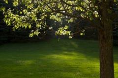 Tageslicht durch Bäume Lizenzfreies Stockfoto