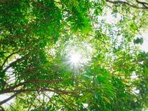 Tageslicht durch Blätter Lizenzfreies Stockbild