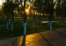 Tageslicht durch die Bäume Stockbild