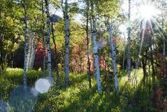 Tageslicht durch die Bäume stockfotografie