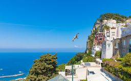 Tageslichtansicht von felsiger Capri-Insel, Italien stockbilder