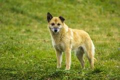 taget foto för hundgräsmarkplan Royaltyfri Fotografi