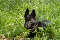 taget foto för hundgräsmarkplan Royaltyfri Foto
