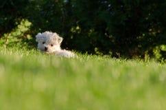 taget foto för hundgräsmarkplan Royaltyfria Bilder