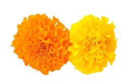 Tagete africano giallo ed arancio Fotografia Stock Libera da Diritti