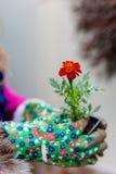 Tagetes flowers Erebta et Patula Royalty Free Stock Images