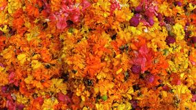 Tagetes flowers on the market in India. Tagetes Marigolds flowers on the market in India - Kerala Royalty Free Stock Images