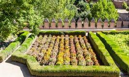 Tagetes garden in spring season Royalty Free Stock Photos