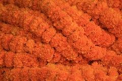 Tageti arancio Fotografie Stock Libere da Diritti
