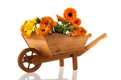 Tageti arancio in carriola di ruota fotografia stock libera da diritti