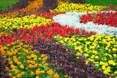 Tagets auf einem Blumenbeet Lizenzfreie Stockbilder