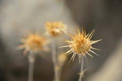 Taggar i Joshua Tree National Park Arkivfoton