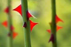 Taggar steg stjälk med skarpa röda taggar på en suddig grön naturlig bakgrund royaltyfri foto