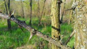 Taggarna på trädet Trägrova spikar Royaltyfria Bilder