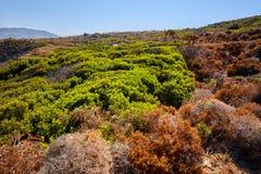 Taggbuskar i vildmarken Royaltyfria Foton