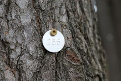 Tagged Pine Tree Stock Images