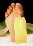 Tagged toe. Right foot of a body in a morgue or hospital, covered with a white sheet royalty free stock photography