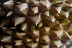 taggig durian Arkivbild