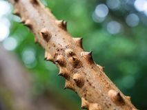 Taggig filial för träd royaltyfri bild