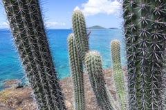 Taggig kaktus på stenig karibisk kust Royaltyfri Foto