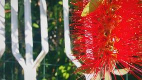 Taggig och konstig röd blomma royaltyfria bilder