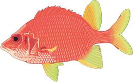 Taggig Squirrelfishillustration stock illustrationer