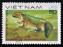 Taggig-tailed ödla med `en för beskrivnings`-Uromastyx acanthinurus från `en för serie`-reptilar, circa 1983 Royaltyfri Foto